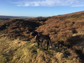 Looking onto Egton Moor