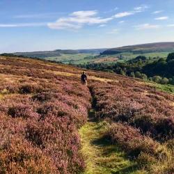 Walkin through the Moors